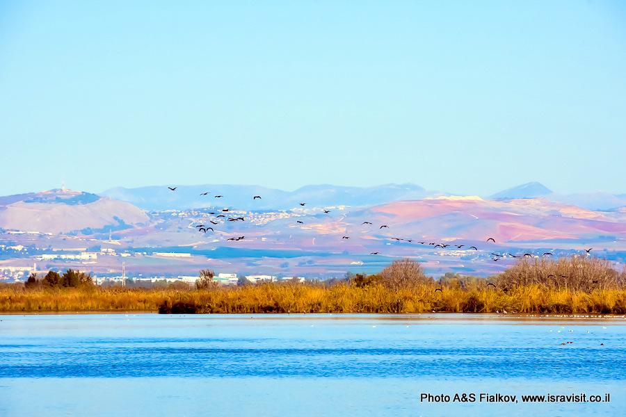 Птичий заповедник Хула, Израиль.