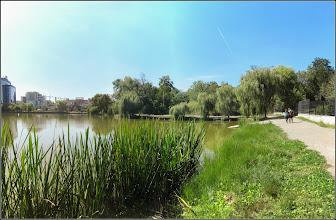 Photo: Buzdugan-de-apă(Sparganium erectum L.) - Din Cluj-Napoca, Iulius Parc