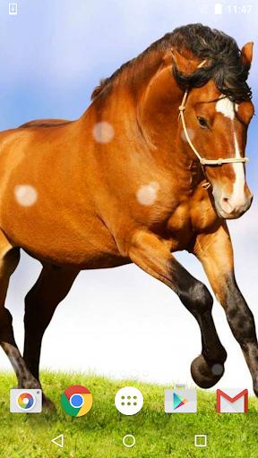 马匹 动态壁纸 HD|玩個人化App免費|玩APPs