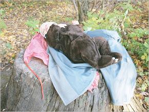 Photo: в этом лесу был даже пеленальник