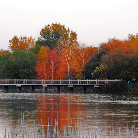 Creek Colors by Kathy Woods Booth - Landscapes Waterscapes ( michigan, reflection, waterscape, autumn, reflections, bridge, autumn colors, bridges )