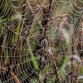 by P Murphy - Nature Up Close Webs