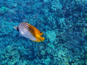 Photo: Fish(at Two Step).