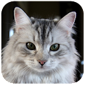 Cat Wallpapers icon