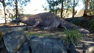 Photo: Platypus at the Platypus Centre which also has an Indial Rest, IGA & Fast Food place