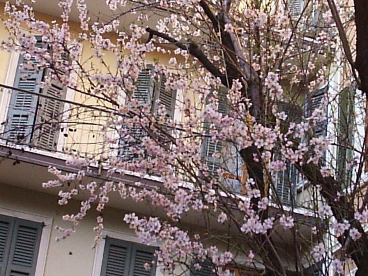 Aprite le finestre è primavera di mariarosa-bc