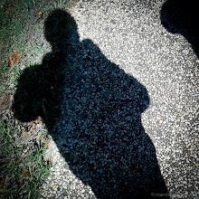 Photo: 5: Shadow #FMSphotoaday