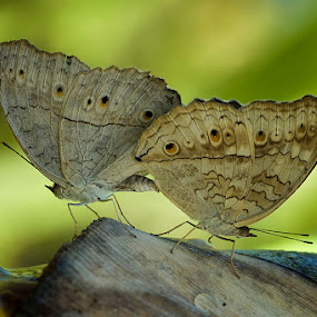 Morning Mating by Yan Kebak - Animals Insects & Spiders