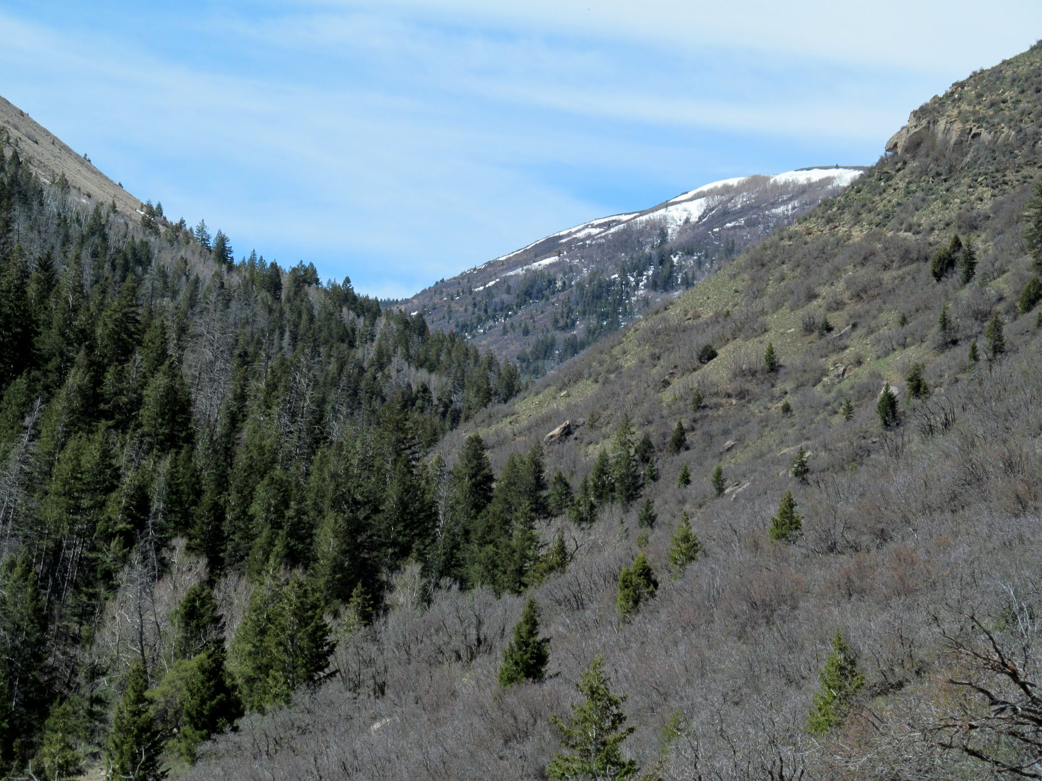 Photo: View up Ford Creek toward Ford Ridge