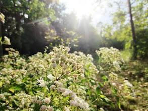 Photo: White flowers under white sunlight at Eastwood Park in Dayton, Ohio.