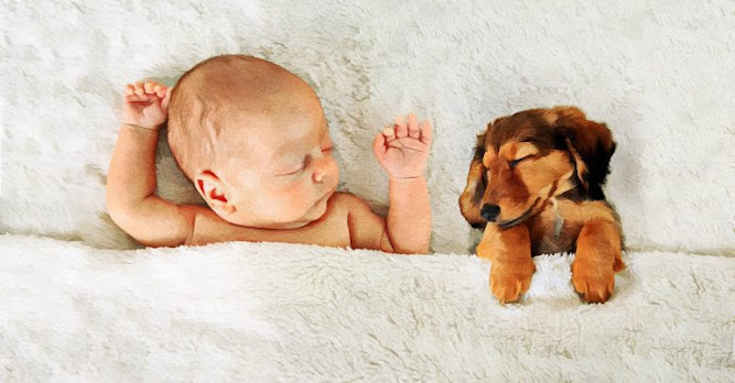 Why Having A Pet Makes Kids (And Families) Stronger + How To Introduce Your Baby To Animals