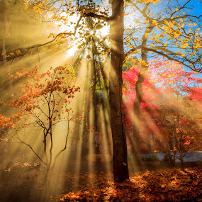Autumn Rays by Brandon Montrone - Landscapes Sunsets & Sunrises ( atmosphere, forest, landscape, sun, rays, nature, tree, autumn, fog, outdoor, trees, sunshine, autumn colors, landscapes, garden, light,  )