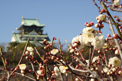 Temple cerisier Osaka