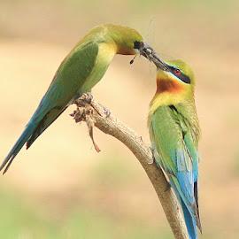 by Prasanna Bhat - Animals Birds (  )