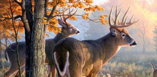 Live deer wallpapers apps on google play - Free deer hunting screensavers ...