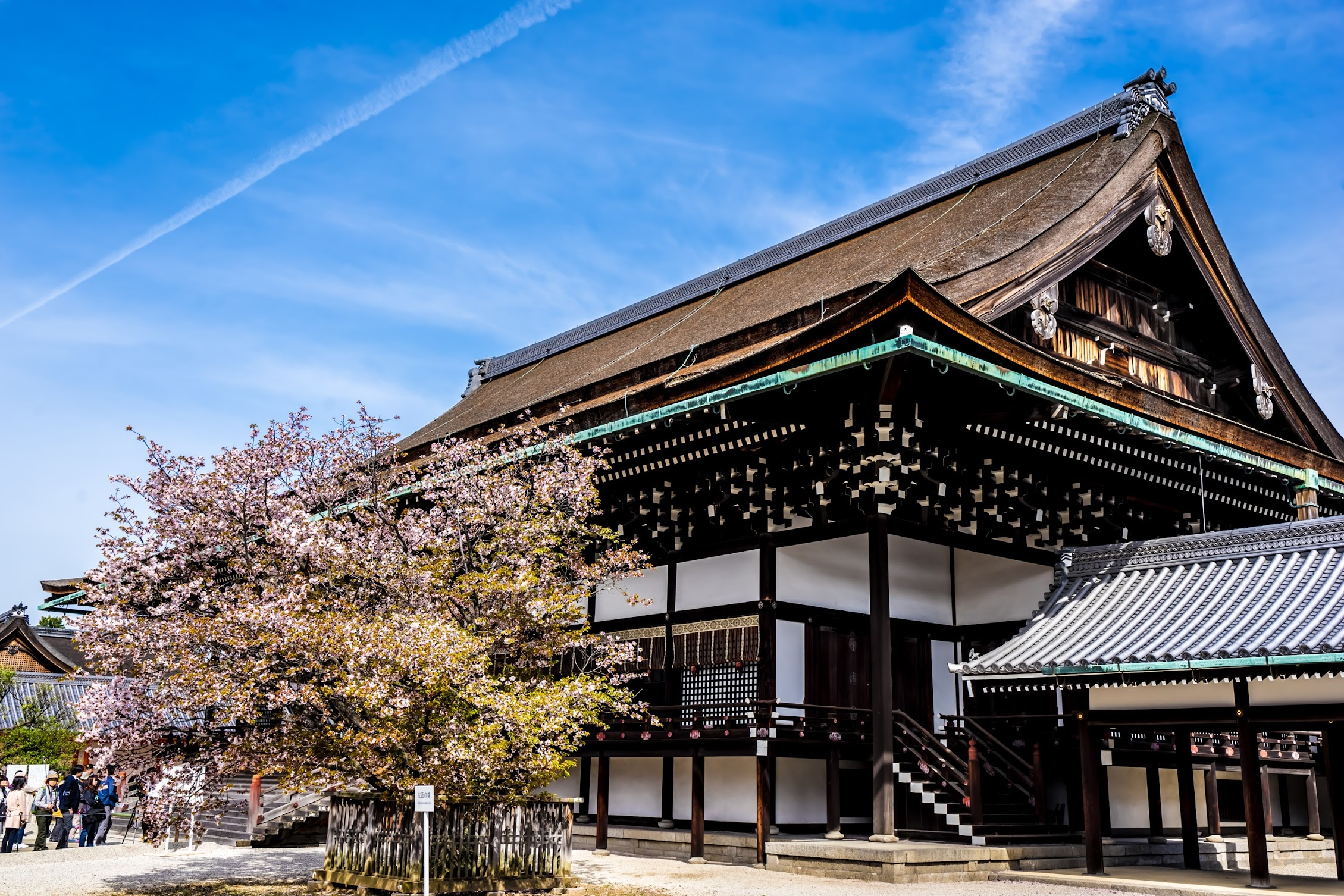 Kyoto Imperial Palace Shishinden Cherry blossoms