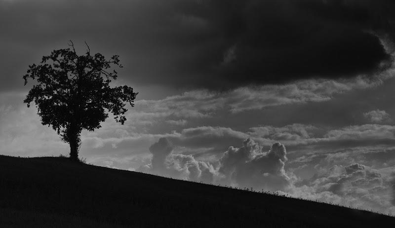alone in the dark di Cinzia_torelli