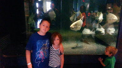 Photo: Gen and Ethan checking out an aquarium - Our Hudson Home exhibit