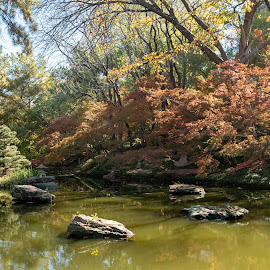 Japanese Garden by Bert Templeton - City,  Street & Park  City Parks ( pond, gardens, green, reflection, reflections, yellow, japanese garden, texas, arboretum, water, trees, worth, orange, red, rock, pagoda, japanese, botanical, rocks, grass, garden, fort, fort worth, lake )