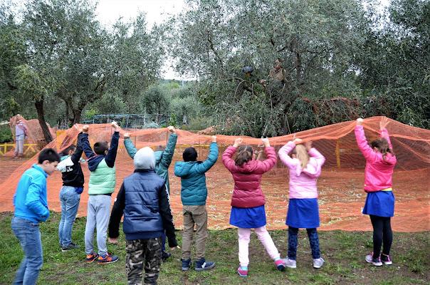 la raccolta delle olive di Elisabetta Castellano