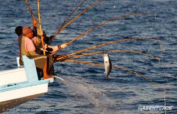 is your canned tuna brand part of the solution for our oceans, Fishing Rod