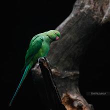 Photo: Parrot!
