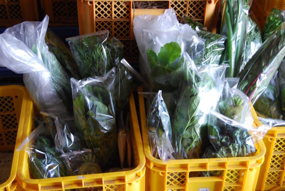 コンテナからあふれるほどいっぱいのお野菜たち。1つのコンテナが1件のお客様です。