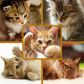 Photo Collage - Kittens Cat