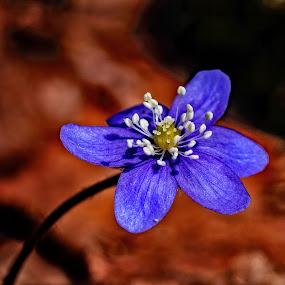 by Bjørn Bjerkhaug - Flowers Flowers in the Wild