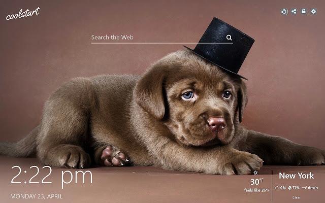 Labrador Retriever Wallpapers Dogs & Puppies