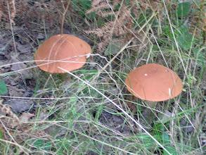 Photo: C9269089 Slemien - grzyby w ogrodzonym osrodku Madahora