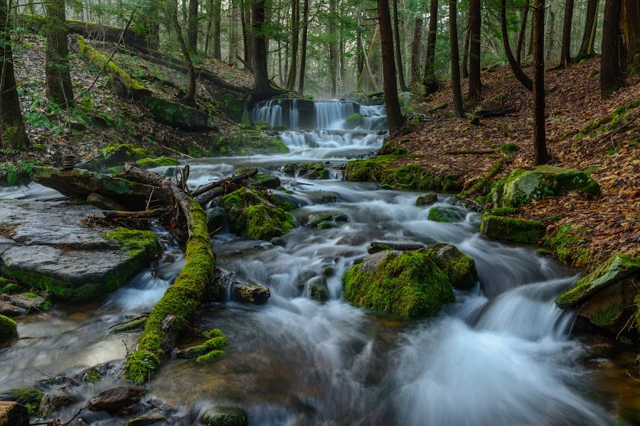 Morning on the Game Lands by Clare Kaczmarek - Landscapes Waterscapes ( forests, waterfalls, pennsylvania, laurel highlands, moss hemlocks, mountain streams )
