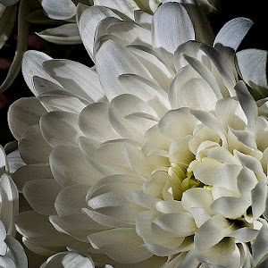 FlowerMacros110912_08.jpg
