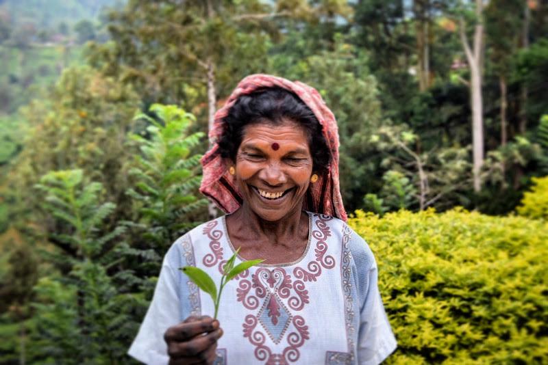 Valle del té..Sri Lanka di marco_stifanelli