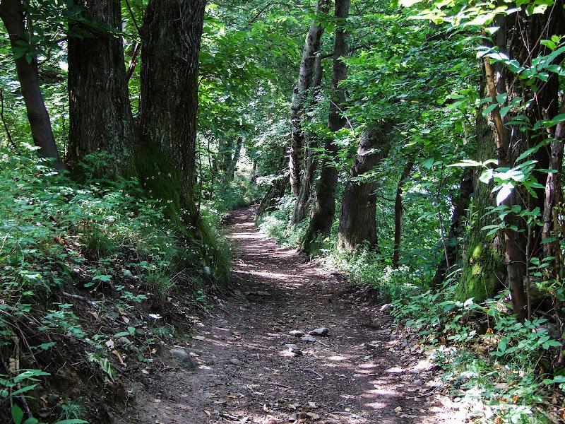 Una strada nel bosco di Giò Volpi