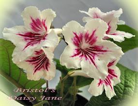 Photo: Bristol's Daisy Jane