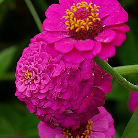 by Arantxa Martinez - Novices Only Flowers & Plants (  )