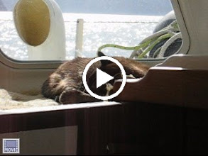Video: Sake snoozing as we motor toward South Cape