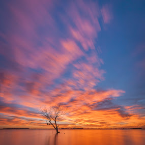 Texan Sunset by Darren Whiteley - Landscapes Sunsets & Sunrises ( colour, clouds, water, tree, color, sunset,  )
