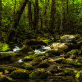 Enchanted Forest  by Ernie Page - Landscapes Waterscapes ( roaring fork motor trail, national park, great smoky mountain national park, streams, waterscapes )
