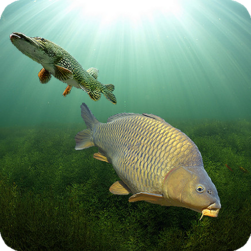 3DCARP APK Cracked Download