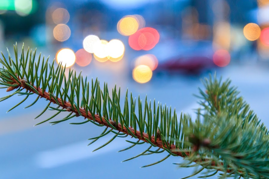 Holiday Happenings by Kathy Suttles - Public Holidays Christmas ( red, yellow, christmas lights, bokah, holiday, christmas tree branch )