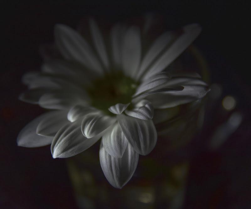 Soft light di pieralisa