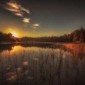 Bjørkelangen Norway by Rose-marie Karlsen - Landscapes Sunsets & Sunrises ( nature, sunset, trees, watershots, norway,  )