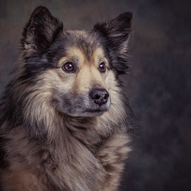 Frodo by Henk  Veldhuizen - Animals - Dogs Portraits ( dogs, dog portrait, dog, portrait, animal )
