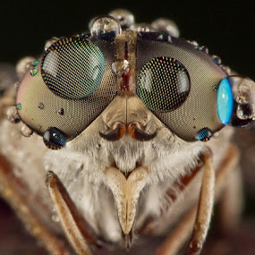 Big Dews... by Vincent Sinaga - Animals Insects & Spiders