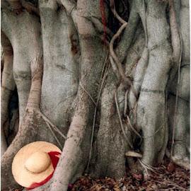 Tree by Marissa Enslin - Digital Art Things