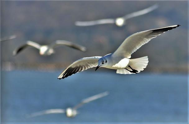 Libero di volare