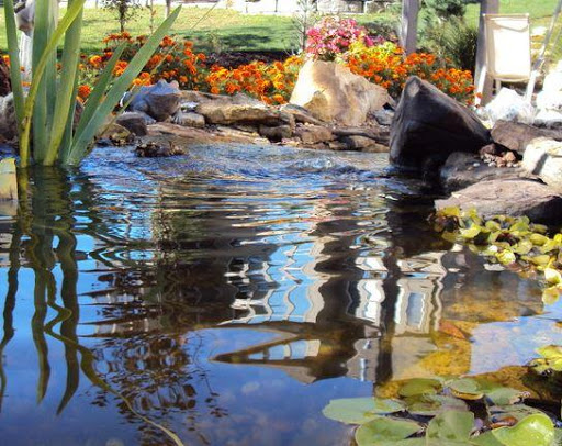 鱼池设计理念