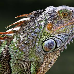 by Patrick Sherlock - Animals Reptiles